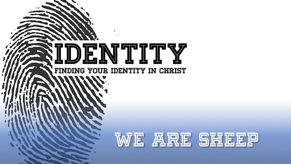 IDENTITY: We Are Sheep
